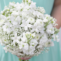 babies-breath-wedding-bouquet