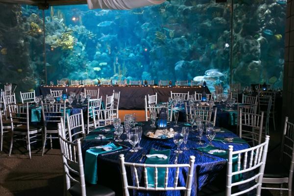 somethingturquoise diy aquarium wedding carrie wildes photography 0027 jpg 0025