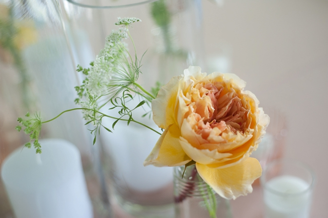 simple cabbage rose