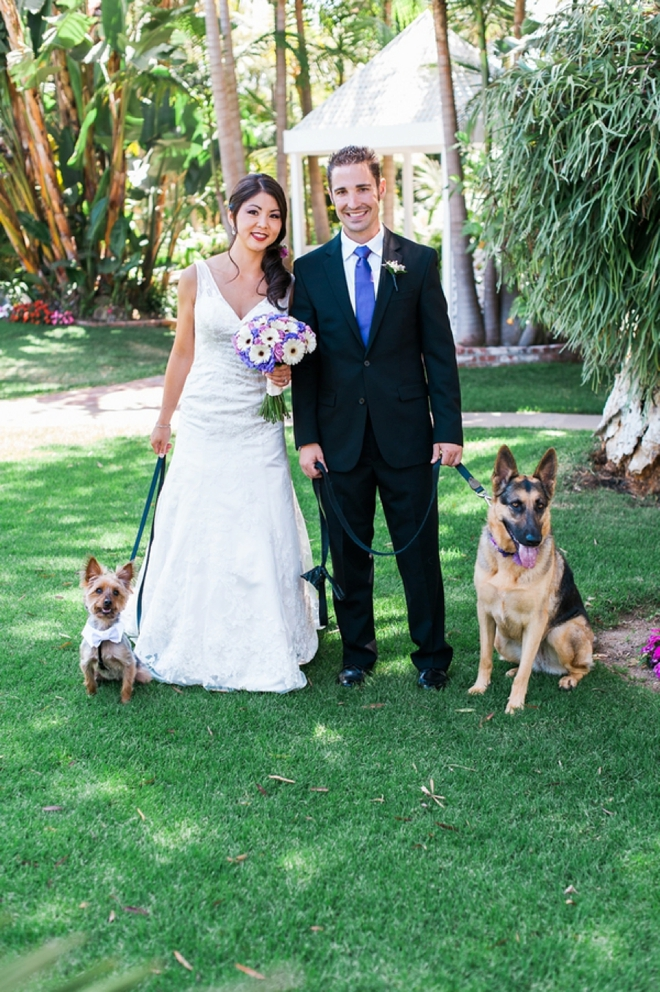 bride and groom and their dogs