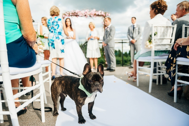 French bull dog at wedding