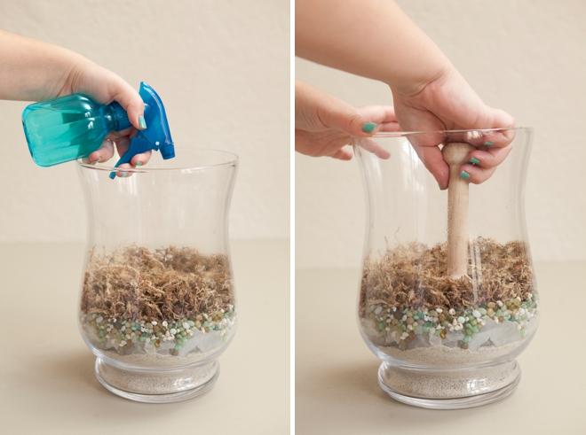 Sphagnum moss tips
