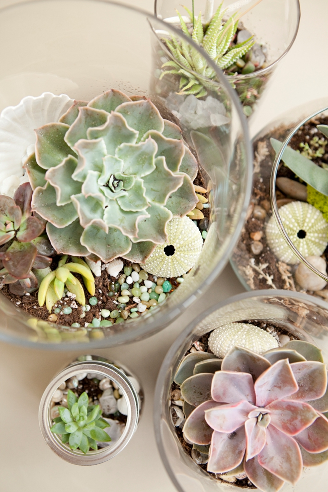 DIY Wedding Terrarium Centerpieces and Favors