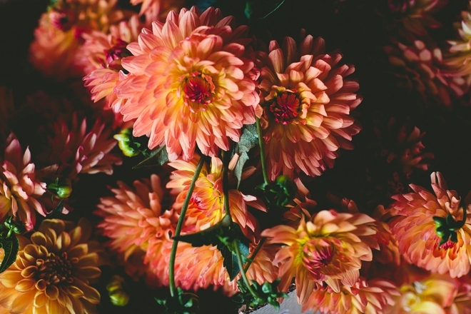 Gorgeous orange mums