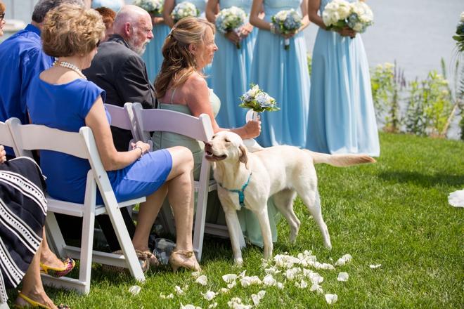 Dog ring bearer