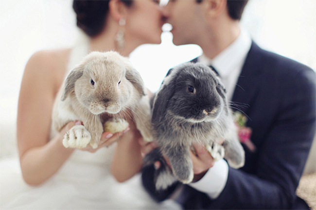 Adorable bunny wedding portrait!