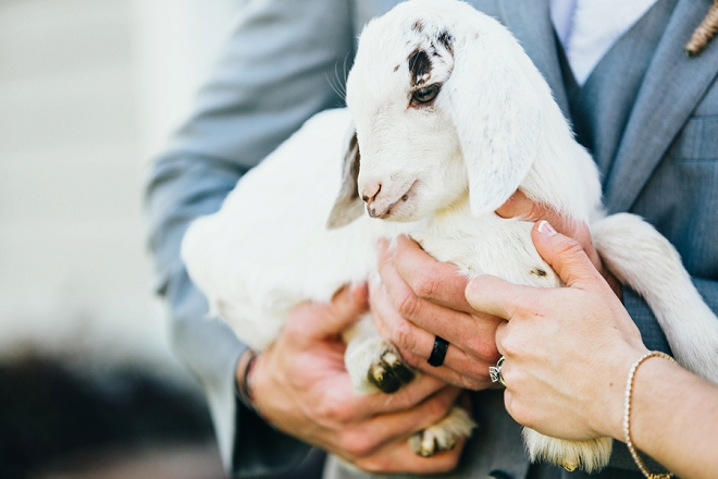 How cute is this tiny goat and the darling couple at their rustic Chattanooga wedding?! LOVE!