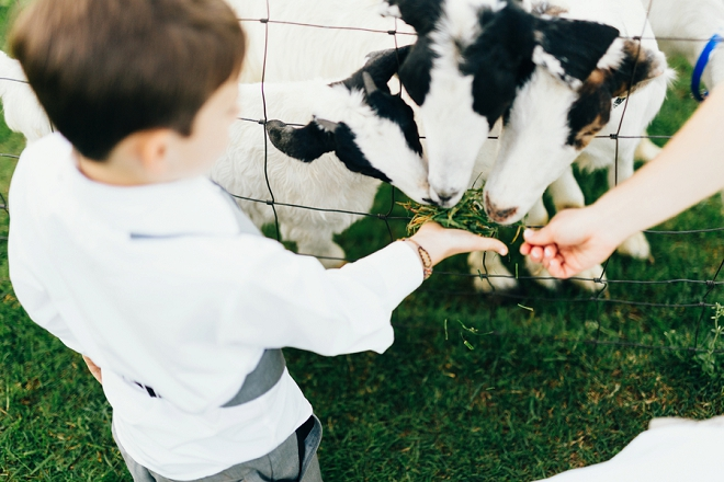 We love this outdoor reception activity to feed the goats! So cute!!