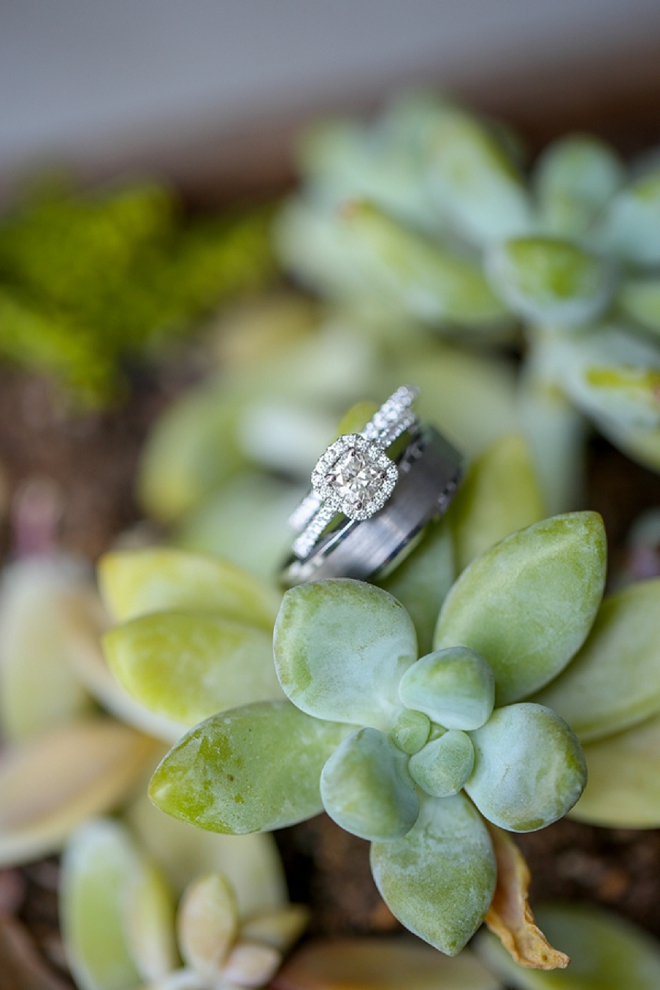 We LOVE this stunning succulent ring shot!