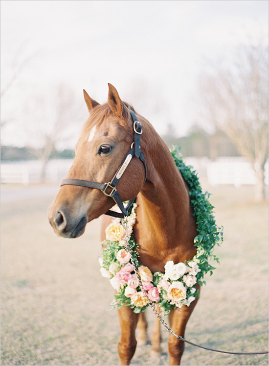 How to involve your pets at your wedding - like this horse!