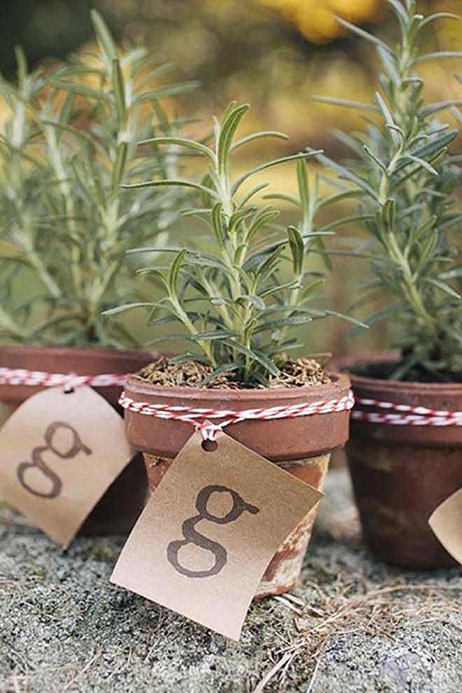 herbs make the perfect favor for a spring wedding.