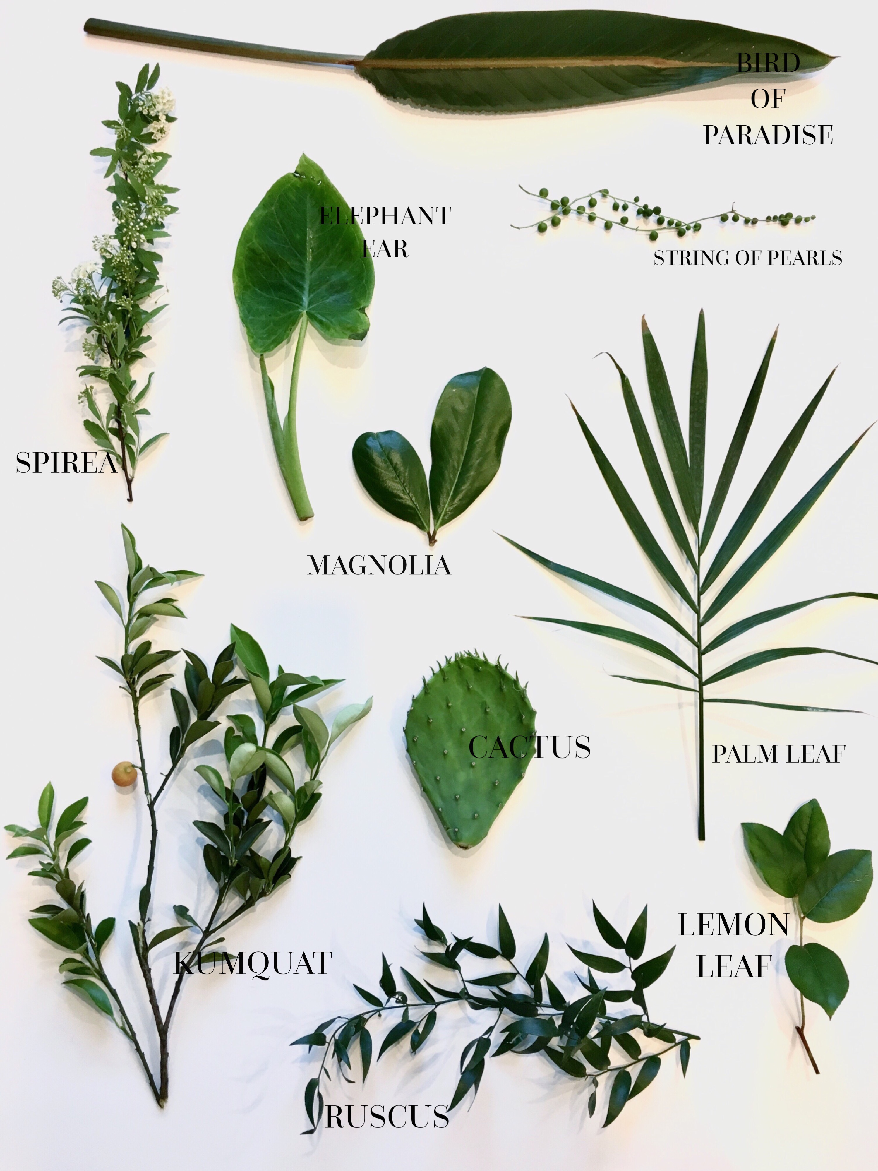 Different types of greenery that would be perfect for your wedding day!
