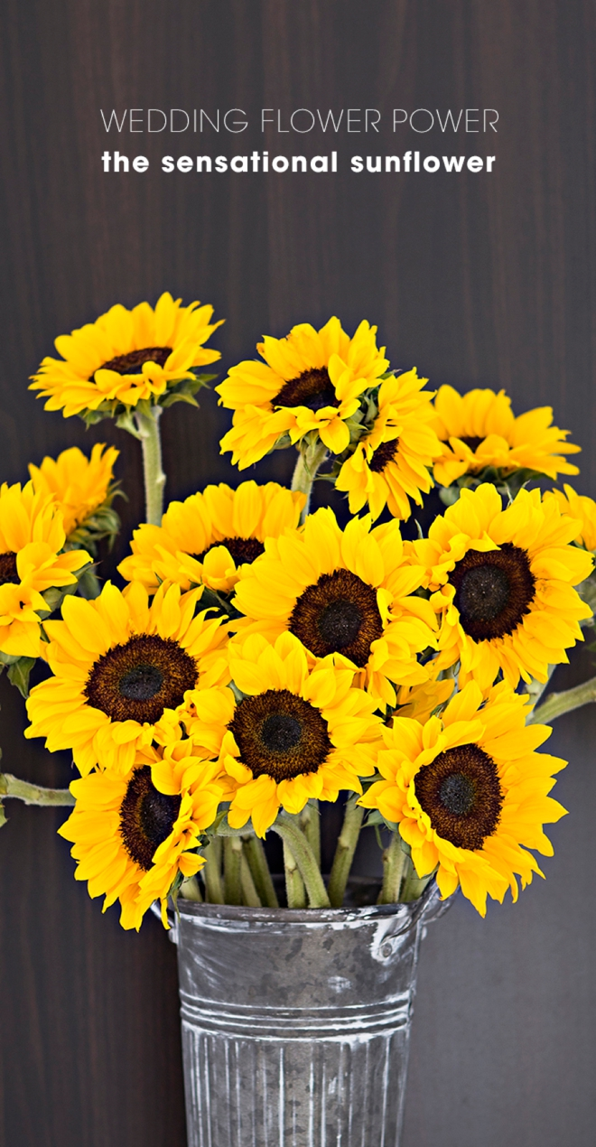 Wedding Flower Power // The Sensational Sunflower