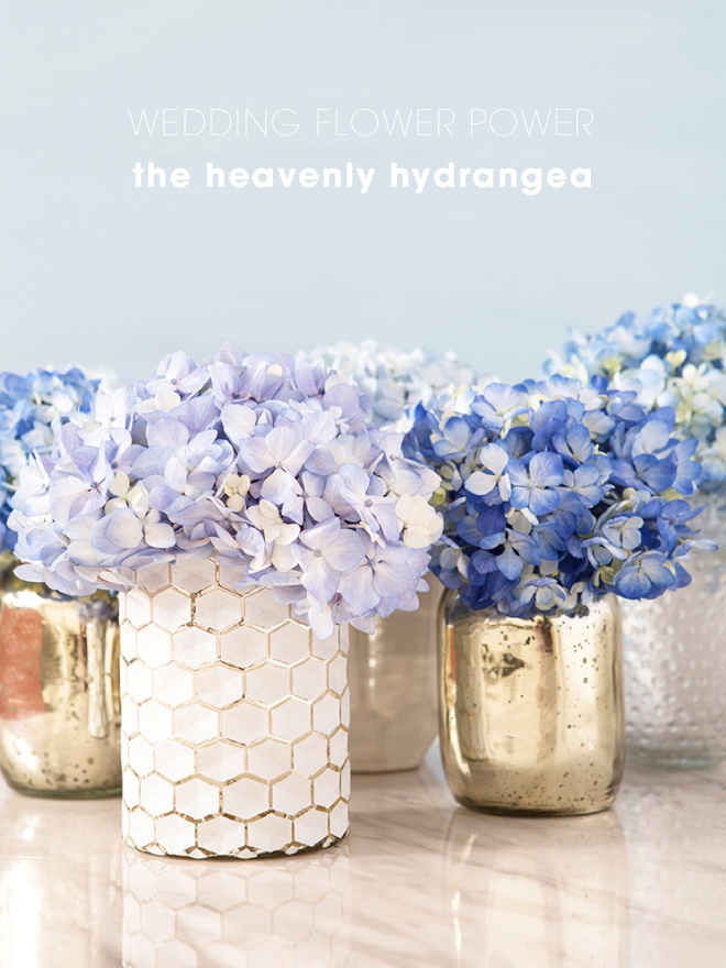 Everything you need to know about using Hydrangea flowers in your wedding!