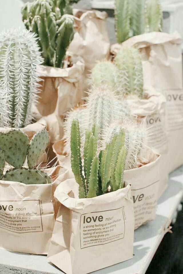 I'd so much rather give a succulent or cactus than food at my wedding as a wedding favor. Such a cute idea.