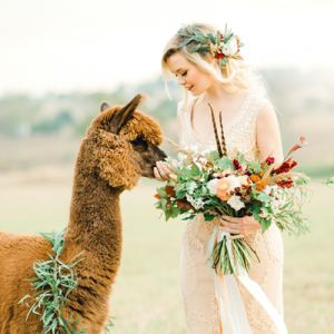LOVING this stunning and whimsical styled shoot featuring this adorable Alpaca!