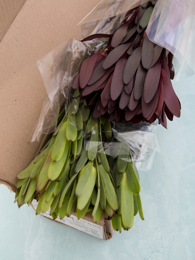 Gorgeous Leucadendron greens from FiftyFlowers.com!