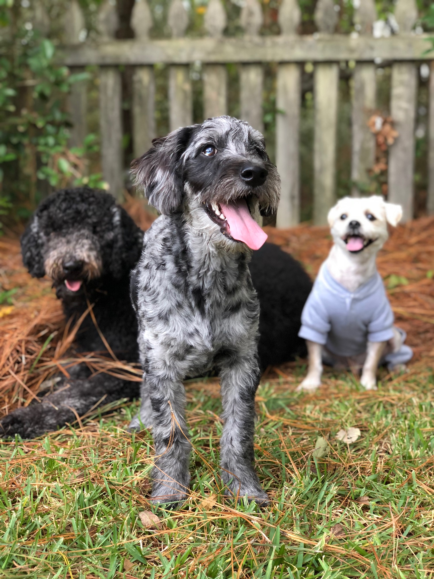 How adorable are Shea's three pups on vaca in Charleston?!